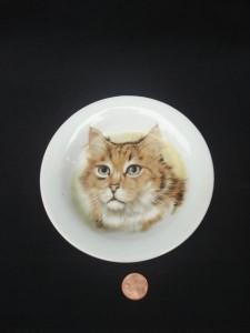 2a-kittydish